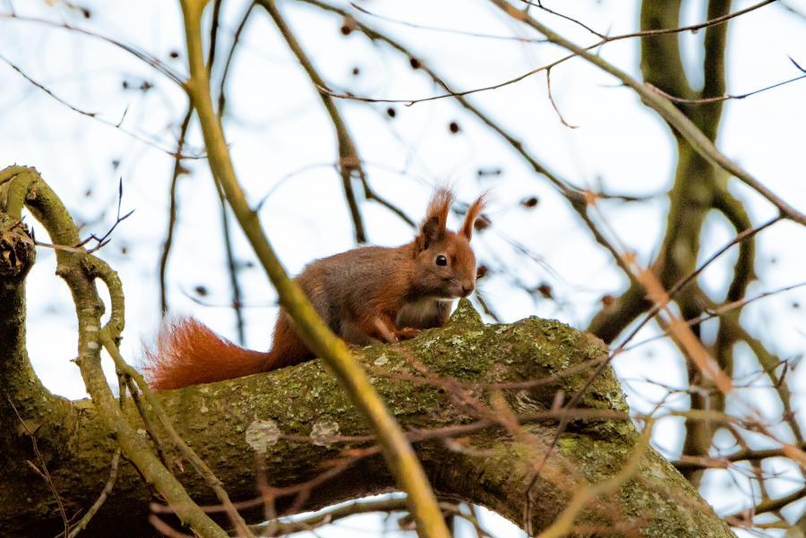 Et egern i Ulkerup skov. Fotograf: Lene Borg Andersen